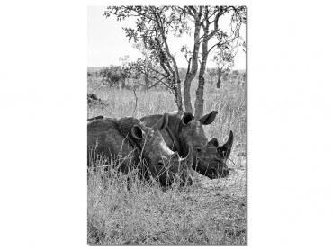 Tableau Animaux Repos du Rhinoceros