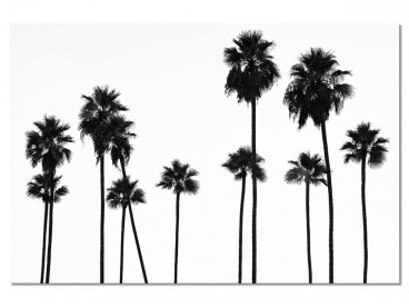 Tableau Palmier Black California