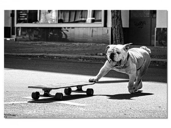 Tableau photo Skate Dog