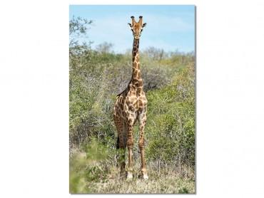 Tableau Animaux Girafe La Sophie