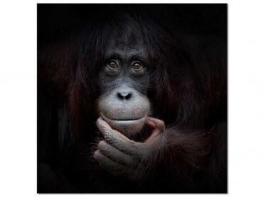 Tableau Animaux Gorilla Smile