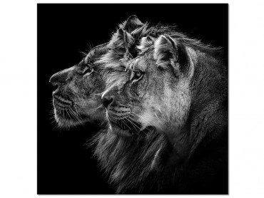 Tableau photo Lion et lionne