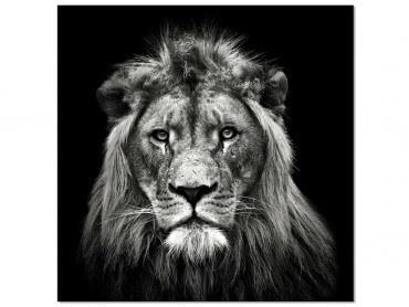 Tableau Photo Jeune Lion