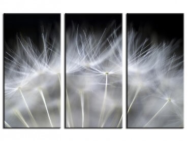 Tableau Photo Coeur de pissenlit
