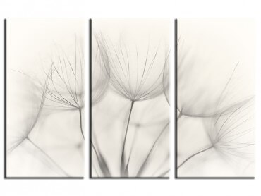 Tableau Fleurs Dandelion