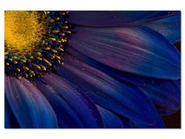 Tableau Fleur Purple pétales