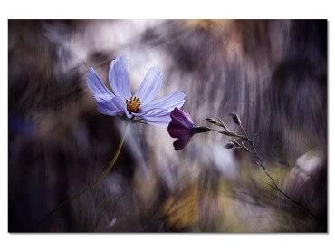 Tableau Fleur Rencontre violette