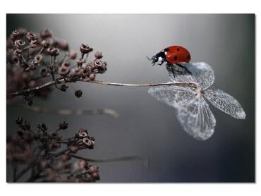 Tableau Fleur Ladybird on a Poppy