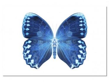 Tableau Animaux Papillon bleu