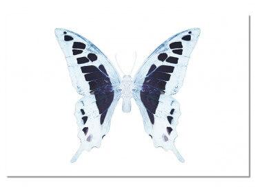 Tableau Papillon de nuit Blanc Bleu