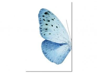 Tableau Collection papillon de gauche