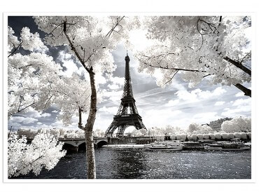 Poster de Paris et ses arbres blancs