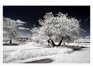 Affiche Paris - Jardin blanc comme neige