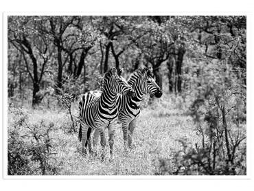Affiche Animaux Savane en Noir et Blanc