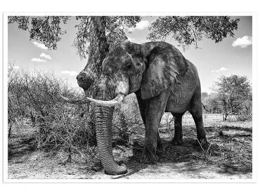 Affiche Elephant ...Pause ombragée