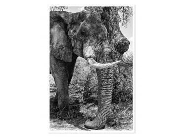 Affiche Eléphant.. Al 'ombre de mon arbre...