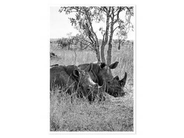 Poster Animaux Repos du Rhinoceros