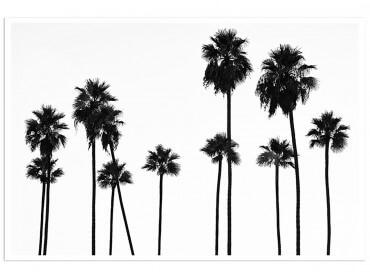 Poster de Palmier Black California