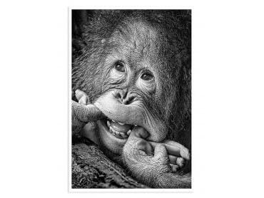 Poster Animaux Grimace de chimpanzé