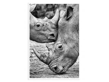 Poster Animaux Bisous de Rhino