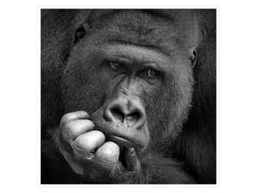 Gorilla Meditation Affiche