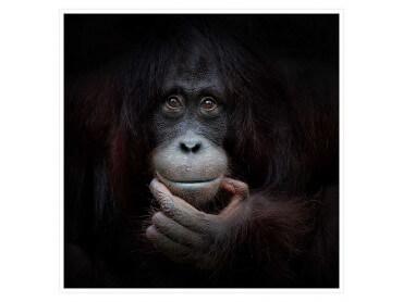 Poster Animaux Gorilla Smile
