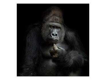 Affiche Animaux Gorilla Imho...