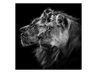 Poster photo Lion et Lionne