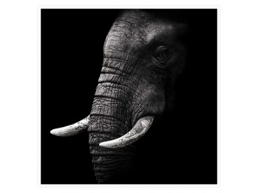 Elephant Africa Affiche animaux