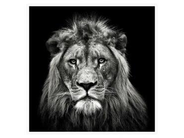 Affiche Animaux Jeune Lion