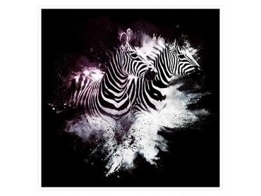 Affiche Photo Duo de Zebre Wild Explosion