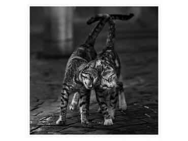 Affiche Chat... gros câlin de chaton