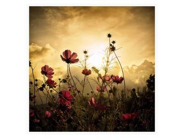 Poster fleurs de nos campagnes...