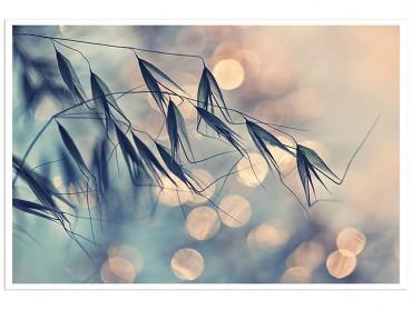 Affiche Deco blés naissant ...