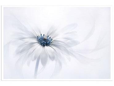 Affiche Fleur au coeur bleu