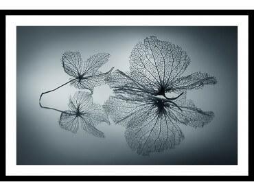 Affiche Photo Plume d' eau