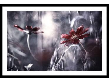 Affiche photo romance florale