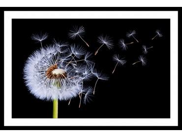 Affiche Fleur Vole pissenlit vole !