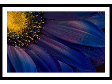 Affiche Fleur Purple pétales