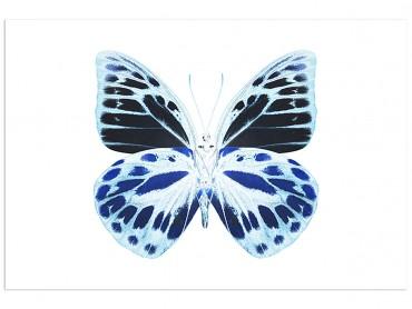 Affiche Animaux Papillon de nuit