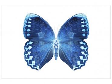Affiche Animaux Papillon Bleu