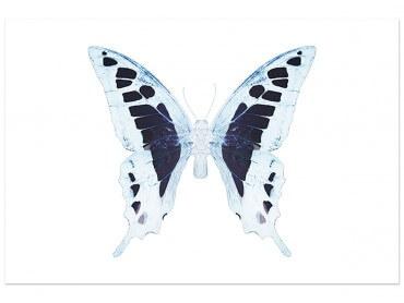 Affiche Papillon Blanc