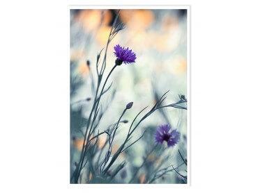 Affiche Deco Garden flower