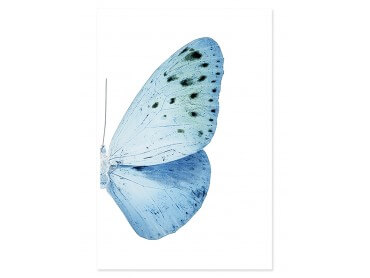 Affiche collection Azul Butterfly