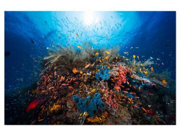 Tableau animaux Récif du Pacifique