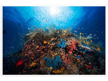 Affiche Animaux Récif du Pacifique