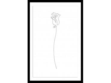 Affiche Dessin Bouton de rose Croquis