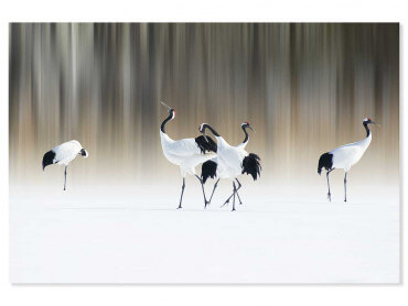 Tableau animaux japanese crane