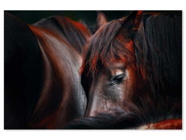 Tableau animaux cheval endormi