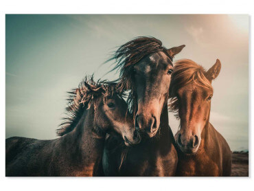Tableau animaux horse family